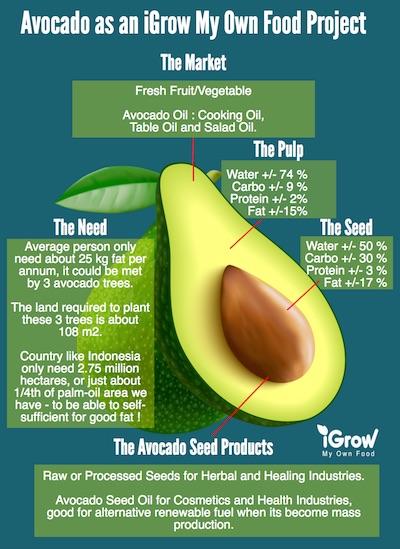 avocado_igrow