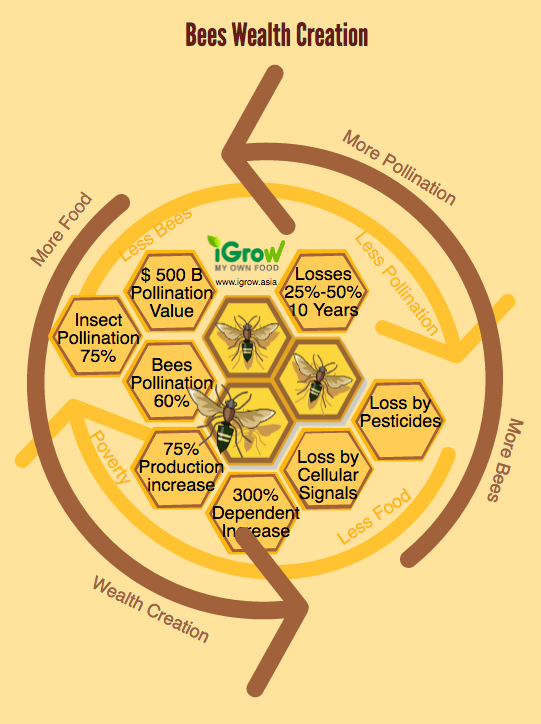 bees_wealth